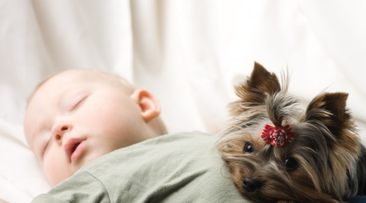 Introducing Your Newborn To A Family Dog