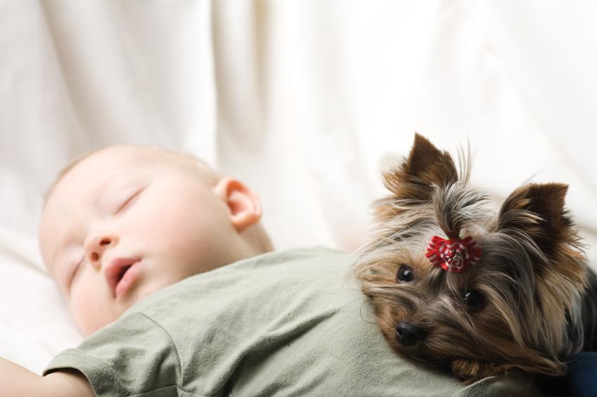 Bringing Home Newborn To Dog