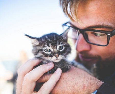 Why Are Cat Lovers So Awesome?