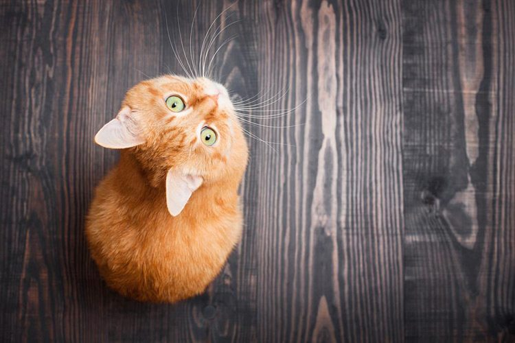 The Top 4 Benefits of Having a Cat in Your House