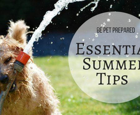 Be Pet Prepared – Essential Summer Tips