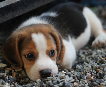 What to Do if Your Pet Goes Missing