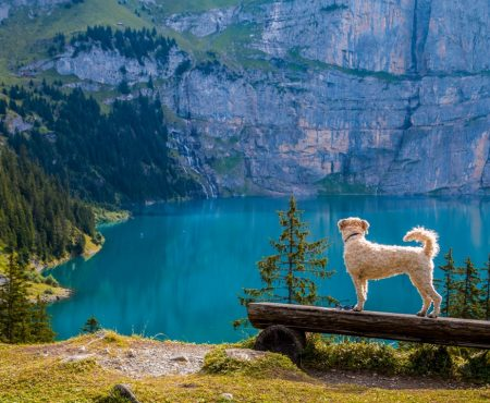 Top Dog-friendly Destinations for Millennial Travelers