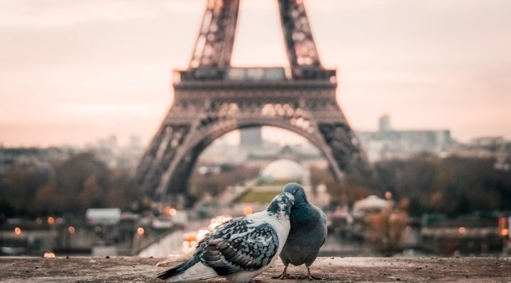 Ultimate Things to Do in Paris for Couples